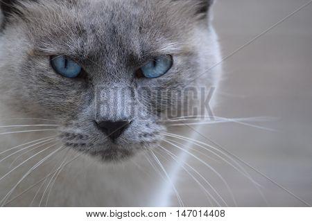 Olhar sério de animal doméstico revelando o seu carácter.