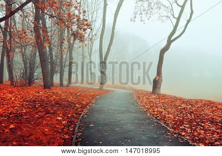 Autumn view of misty park autumn nature. Autumn park alley in dense fog - foggy autumn landscape with bare autumn trees and orange fallen leaves. Autumn alley in dense autumn fog. Soft focus applied.