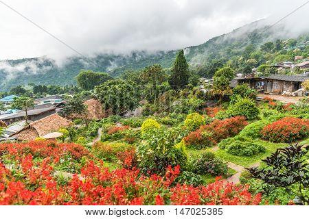 Flower garden in Hmong village at Northern of Thailand.