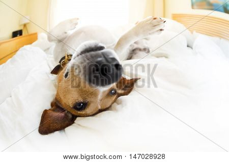 Dog In Bed Resting And Relaxing Daydream