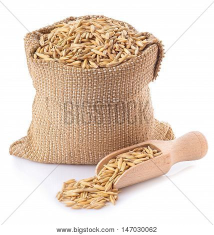 oat grains with husk in burlap bag with a wooden scoop near isolated on white background. Uncooked oat grains with husk isolated on white background. Oat grains with husk. Cereal grains