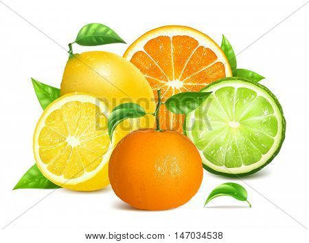 Fresh citrus fruits with leaves. Fully editable handmade mesh. Vector illustration.