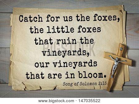 TOP-150 Bible Verses about Love.Catch for us the foxes, the little foxes that ruin the vineyards, our vineyards that are in bloom.