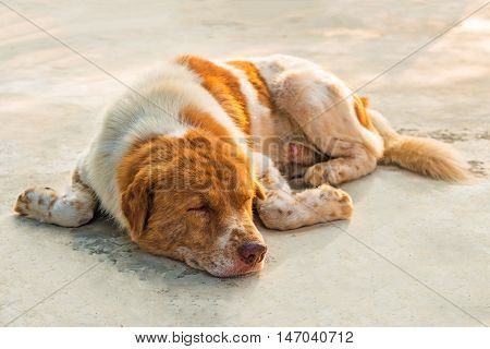 A dog is sleeping on concrete floor.