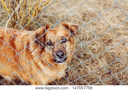 Red dog pooch with sad eyes behind wire mesh, animal protection concept.