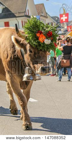 Almabzug - ceremonial driving down the cattle from the mountain pastures into the valley in autumn in Schüpfheim Switzerland