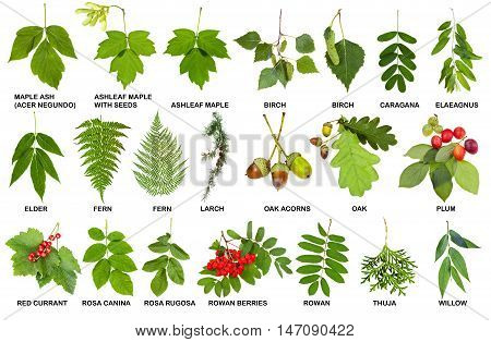Collection Of Natural Fresh Twigs With Leaves