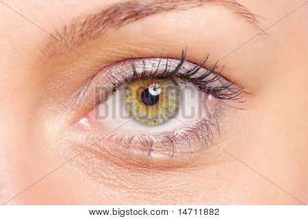 Beautiful woman eyes over white background