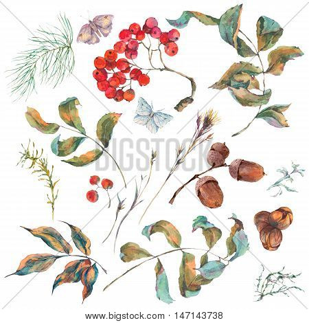 Set of watercolor vintage autumn branches of rowan, spruce, acorns and butterflies isolated on white. Natural autumn botanical collection.