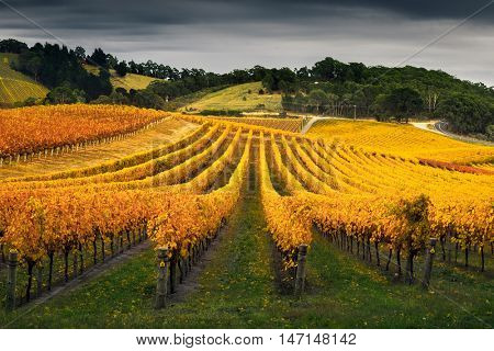 A beautiful vineyard in the Adelaide Hills