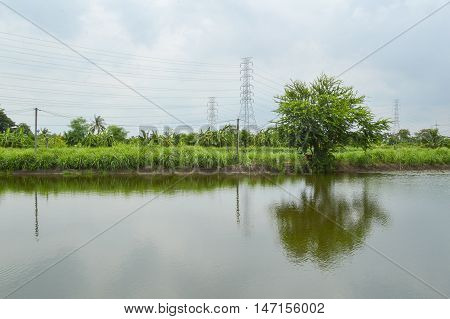 close up nature landscape in country thailand