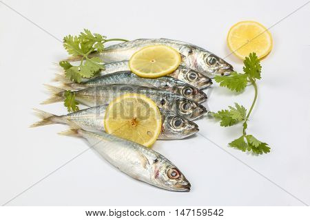 Sardine pilchard herring Fish raw fresh on white background