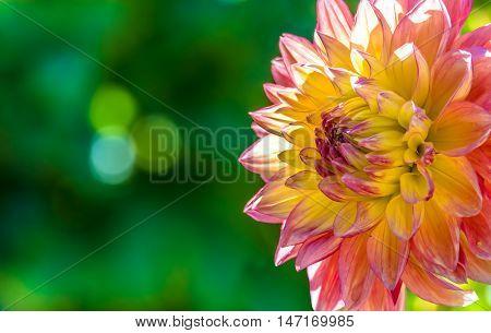 Fresh autumn flower over dark bokeh background