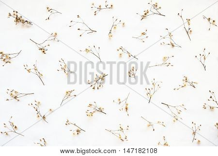 Dried plants autumn pattern isolated on white background. Herbarium - beautifully arranged wilted wildflowers herbs