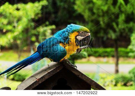 Maccow Parrot Bird Portrait