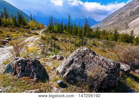 Rural mountain landscape with a curved road rare pine forest. (Altai Russia).
