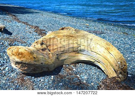 Canada Port Hardy Bay tree trunk water pebbles