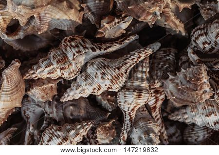 sea shell, seashell photo, seashell pile, seashell for sale