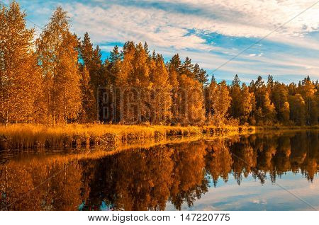 highly detailed image of autunm trees and river