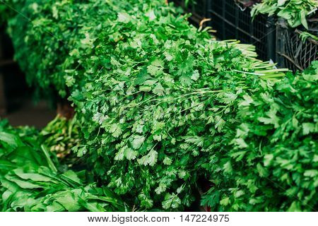 Close View Of Fresh Green Bunches Of Aromatic Fragrant Greens Of Petroselinum Parsley And Coriander Leaves Cilantro On The Showcase At The Market, Bazaar.