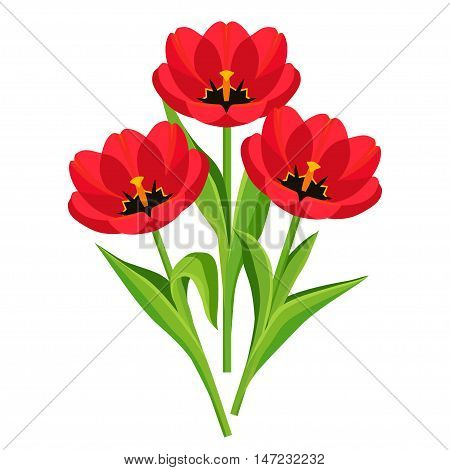 Beautiful nature background with three red tulips. Stylized bright spring flowers isolated over white. Floral design elements for Womens Day, Mothers Day, Easter. Vector illustration