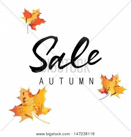 Sale autumn lettering. Black sale autumn inscription on white background with colorful maple leaves. Calligraphy can be used for postcard, flier, banner