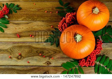 Thanksgiving background with pumpkins and rowan berries. Thanksgiving party invitation card. Harvest concept.