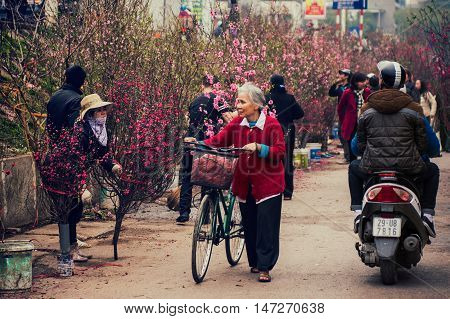 Hanoi, Vietnam - February 13, 2015: Old woman walk with her bicycle to buy peach trees in the flower market for traditional Tet holiday