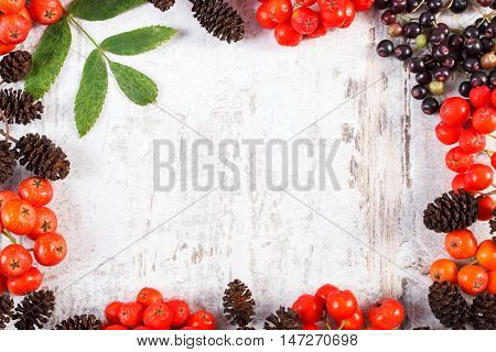 Frame Of Autumn Fruits Of Forest And Copy Space For Text