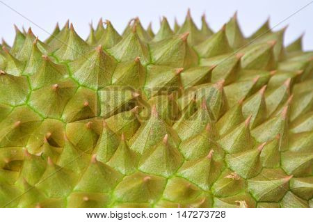 close up of durian spiky texture and background