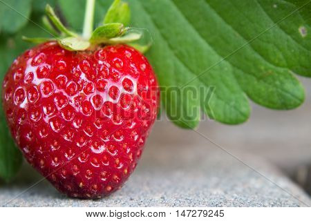 A delicious heart shaped strawberry growing organically in the garden hanging over a paver walkway