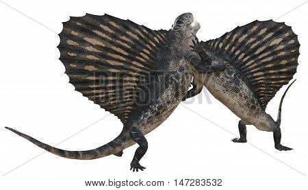 3D rendering of two Dimetrodons competing for territory/mating rights, isolated on white background.