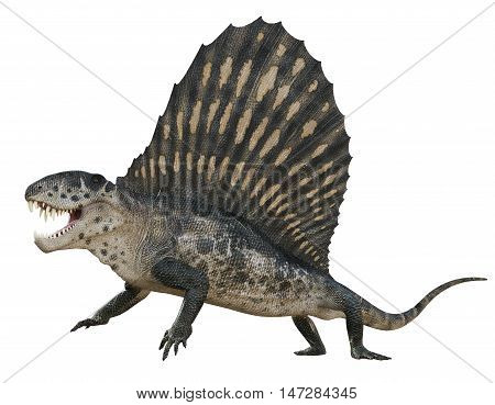 3D rendering of Dimetrodon being aggressive, isolated on white background.