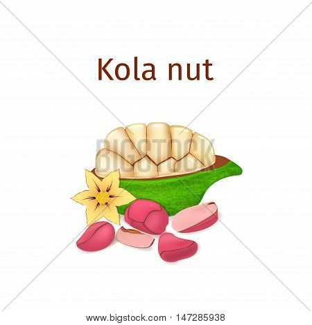Vector illustration of a kola nut. Appetizing kola nut tree with yellow flower, red and yellow nuts and leaves on a white background. Elements of packaging design brochures on healthy eating