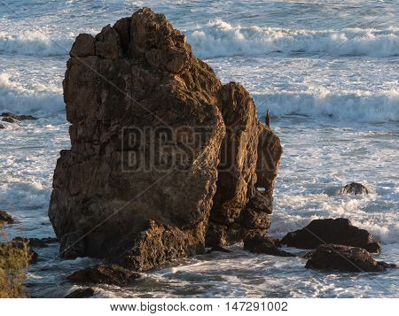 Gray Sea Bird On Cliff In Front Of Choppy Sea