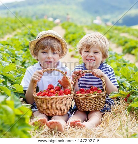 Two funny little sibling kid boys having fun on strawberry farm in summer. Chidren eating healthy organic food, fresh berries. Happy friends and twins.