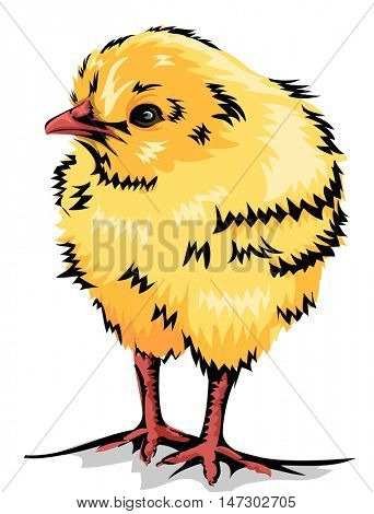 Animal Illustration of a Cute Yellow Chick