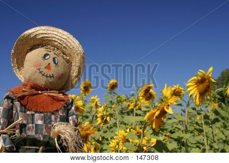 Scarecrow In Sunflowers