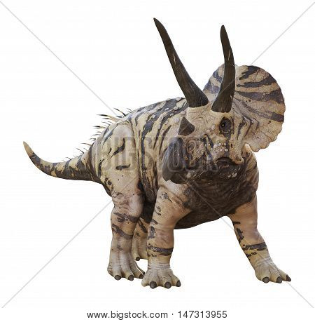 3D rendering of Triceratops horridus looking for predators, isolated on white background.