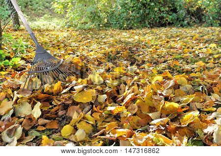 rake on a pile of golden leaves in a garden