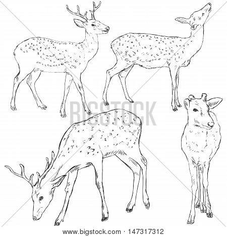 Vector Set Of Sketch Dappled Deers