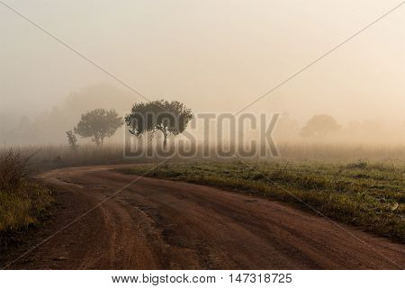 Dirt road pass throught the field on morning mist.