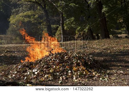 Pile of dry leaves burns in autumn park
