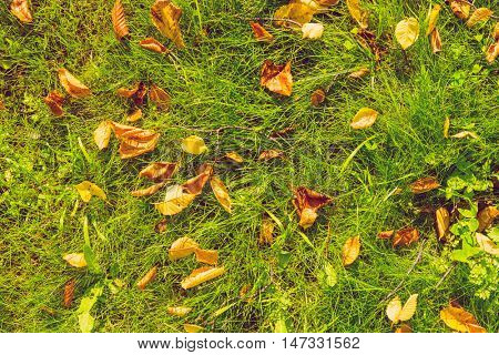 Autumn leaves on green grass field, view from above