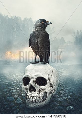 Black Raven On The Skull. Halloween Scene