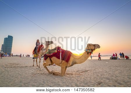 DUBAI, UAE - MARCH 30, 2014: Camel ride on the beach at Dubai Marina on, UAE. Dubai Marina is a district in Dubai with artificial canal city, it accommodates more than 120,000 people.