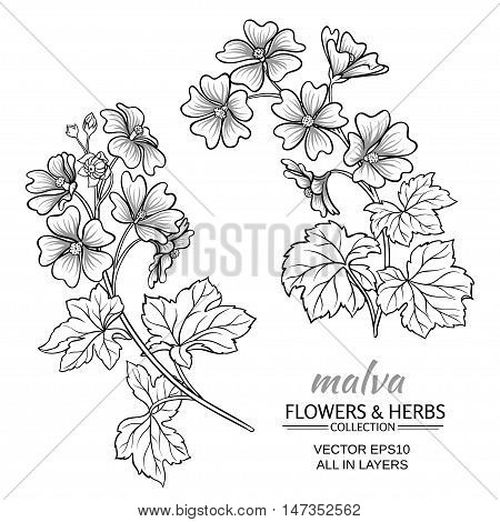 malva plant vector set on white background