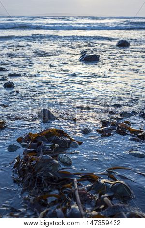 seaweed at rocky beal beach near ballybunion on the wild atlantic way ireland with a beautiful yellow sunset