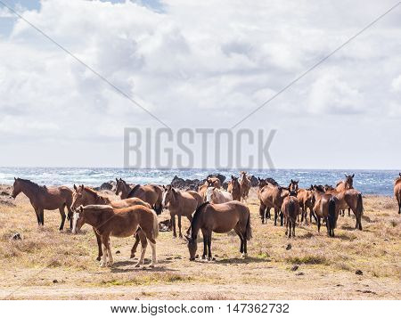 A group of horses in front of the Pacific Ocean in Easter Island Chile of the Pacific Ocean in Easter Island Chile