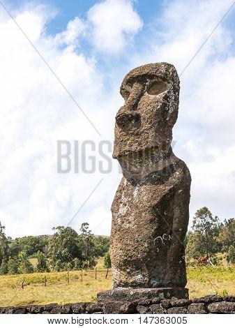 A Single Moai of the Ahu Akivi